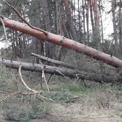 Bürgerinformation zum Betreten von Wald und Feld nach dem Sturm ,,Friederike am 18.01.2018